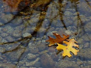 leaf-leaves-streams-water-reflections